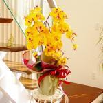 CT触媒加工 優雅で高貴な 胡蝶蘭 の鉢植 三本立(シルクフラワー=造花)