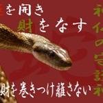 吉兆蛇・水晶ストラップ