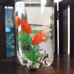 観賞用 ぷかぷか金魚と水草セット