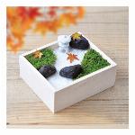 苔盆 苔庭キット GD719