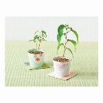 Botanical Pot ボタニカルポット GD-904 栽培キット