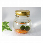 星の砂マリモ瓶 オレンジ