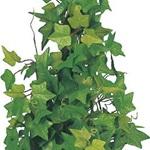 アイビーポット 6ケセット インテリアグリーン 造花