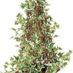 ポーランドアイビートピアリー 3ケセット インテリアグリーン 造花
